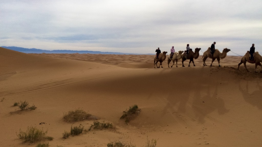 riding camels through theGobi Desert