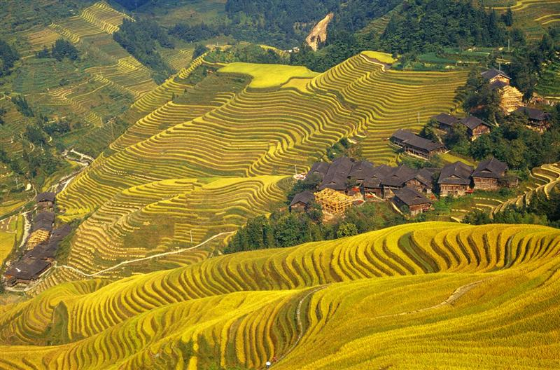 Longshen Dragon Rice Terrace
